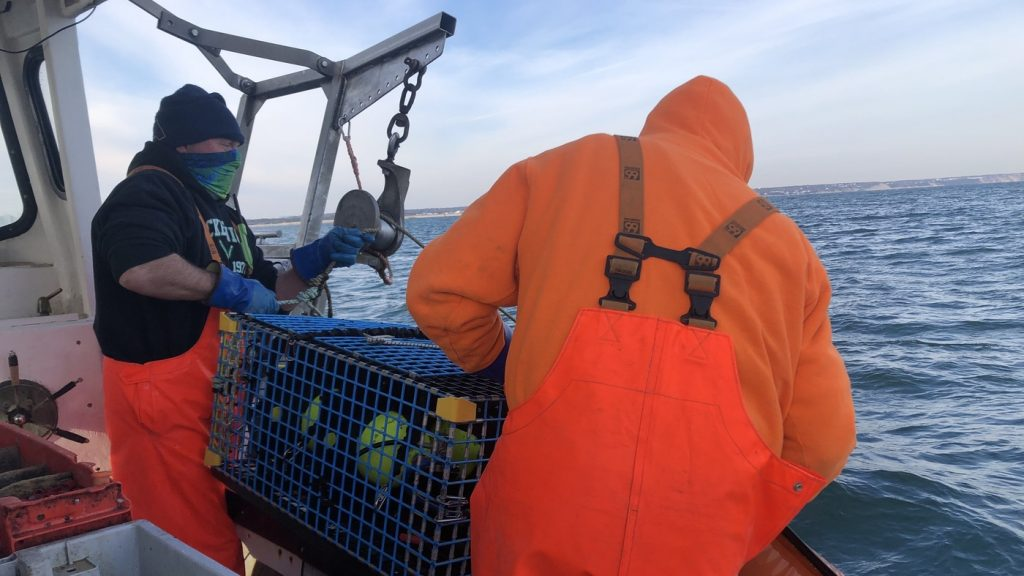 Ropeless Lobster Fishing Is Good News For Some Whales : NPR