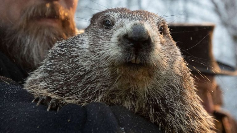 Punxsutawney Phil predicts 6 more weeks of winter after seeing his shadow at virtual ceremony