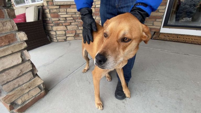 Missing Colorado hiker's dog found alive after 8 days as search suspended for man