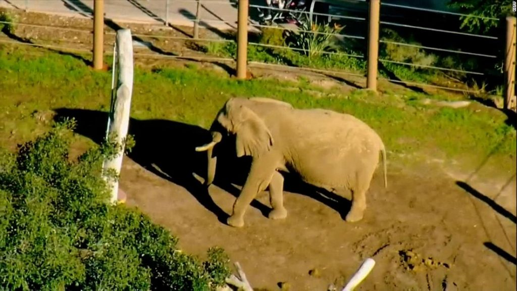 Man arrested after taking his toddler into an elephant enclosure at San Diego Zoo