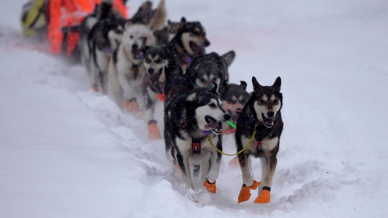 Pandemic Forces Mushers To Adapt To An Already Grueling Iditarod : NPR