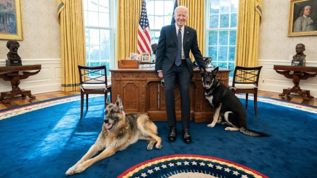 President Biden's Dog Spooked, Causes 'Minor Injury' Incident : NPR