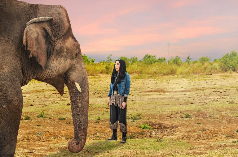 How to Watch 'Cher & the Loneliest Elephant'