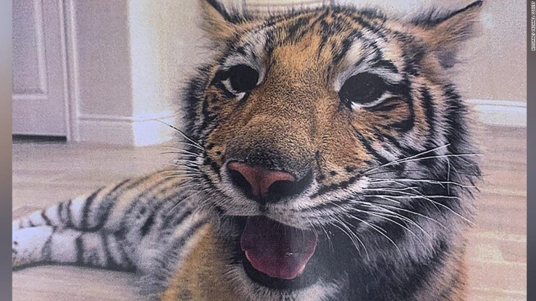 Houston tiger last seen in public Sunday is still missing. Here's what we know