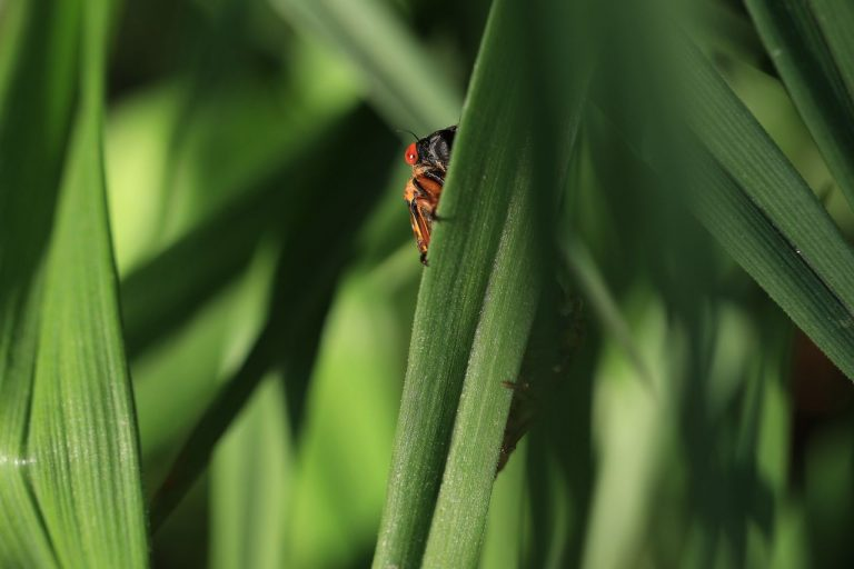 Cicadas Are Here: Nine Facts About the Brood X Emergence