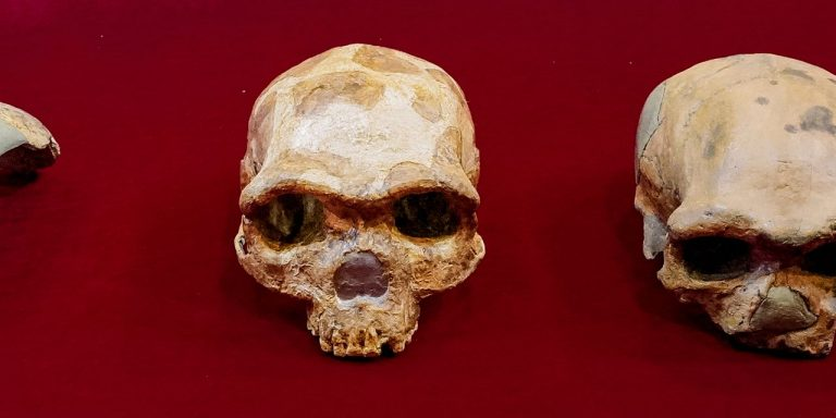 'Dragon Man' Skull Discovery in China Tells Story of Unknown Human Ancestor
