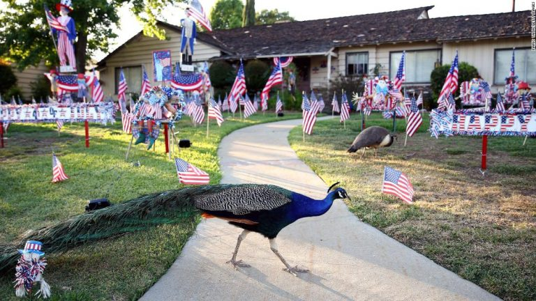 Peacock problems: LA County moves to ban feeding of brightly colored birds