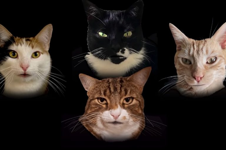 Watch Some Cats Sing Queen-Inspired 'Bohemian Catsody'